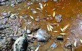 مرگ تلخ آبزیان در سوادکوه شمالی در اثر هدایت پساب کارخانجات به رودخانه/ ابراهیمی:طرح شکایت از واحدهای متخلف انجام شده است