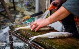 جزئیات گرانی این روزهای قزلآلا/تازهترین قیمت ماهی دریایی و پرورشی در بازار مازندران